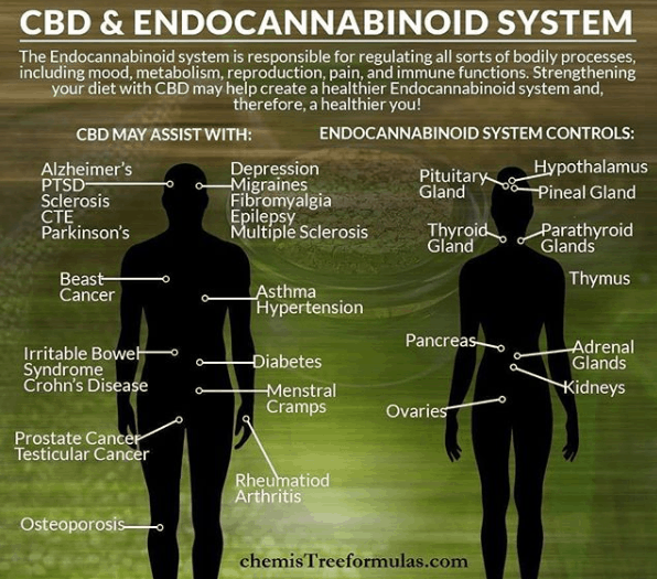 Ep. 66 – Learning about Your Endocannabinoid System Leads to a Healthier Life – with Dr. Patricia Pimentel Selassie